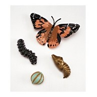 Butterfly Life Cycle Stages Set