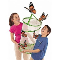 Classroom Butterfly Set for Schools and Nurseries