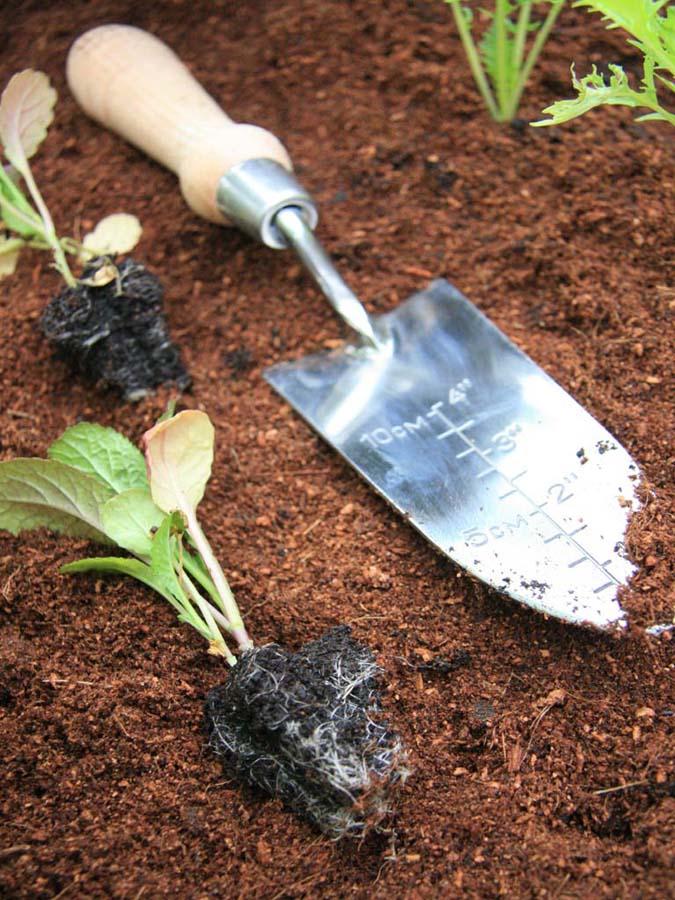 Herb garden gift voucher buy herbs online for Gardening gift vouchers