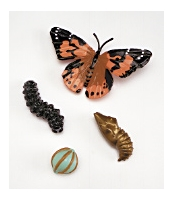 Butterfly Life Cycle Set