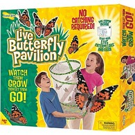 Large Butterfly Pavilion Set