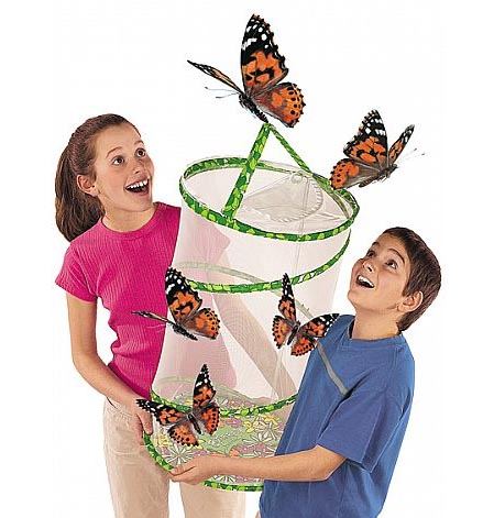 Click to buy a butterfly kit from Spotty Green Frog